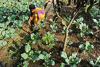BANGLADESH Madhupur, support of Garo people with microcredits and agricultural training for income generation, Garo is indigenous people and are Christians in muslim dominated Bangladesh / Bangladesh, Region Madhupur - Unterstuetzung von Garo Familien mit Kleinkrediten und Trainingsprogrammen zur Existenzsicherung , Garos sind eine christliche u. ethnische Minderheit , Garo Frau Kalpona Ritchil im Dorf Idilpur in ihrem Gemuesegarten