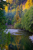 Late evening light along Sol Duc River on Merrill Ring property.  Olympic Peninsula, Washington.  Sept.  This photo is taken from the Merrill & Ring Bridge--1st bridge.