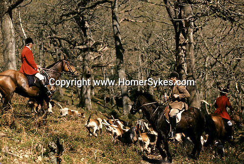 Quantock Staghounds 1990s Uk. Quantock Hills Somerset. Master in hunting pink red coat with pack of hounds. 1997