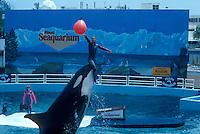 Whale show at the Miami Seaquarium