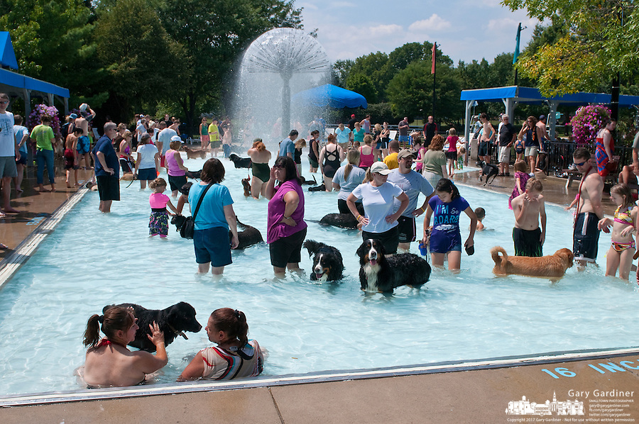 Doggie Paddle at Westerville Highlands Pool after its closing for upgrades during the next year.