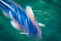 When the shutter is open a bit longer, the subject moves through the frame and creates a sense of motion, in the abstract.  A koi fish at 1/5th of a second.