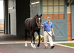 17  November  2009 Kentucky Stallions.  Medaglia d'oro is led out of the barn to be shown at Darley @ Jonabell farm.  Medaglia d'oro is the sire of the sensational filly, Rachel Alexandra.