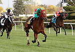 10 October 2009: PROCEED BEE with jockey Chris Emigh winning the 45th running of the G3 Hawthorne Derby at Hawthorne Race Course in Cicero/Stickney, Illinois.