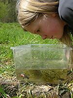Kinder keschern und tümpeln an einem kleinen Teich im Garten und beobachten Wassertiere in einem kleinen Aquarium, Tümpelaquarium, Mädchen, Kind hat einen Molch, Molche  gefangen, Bergmolch, Alpenmolch, Berg-Molch, Alpen-Molch, Ichthyosaura alpestris, Triturus alpestris, alpine newt