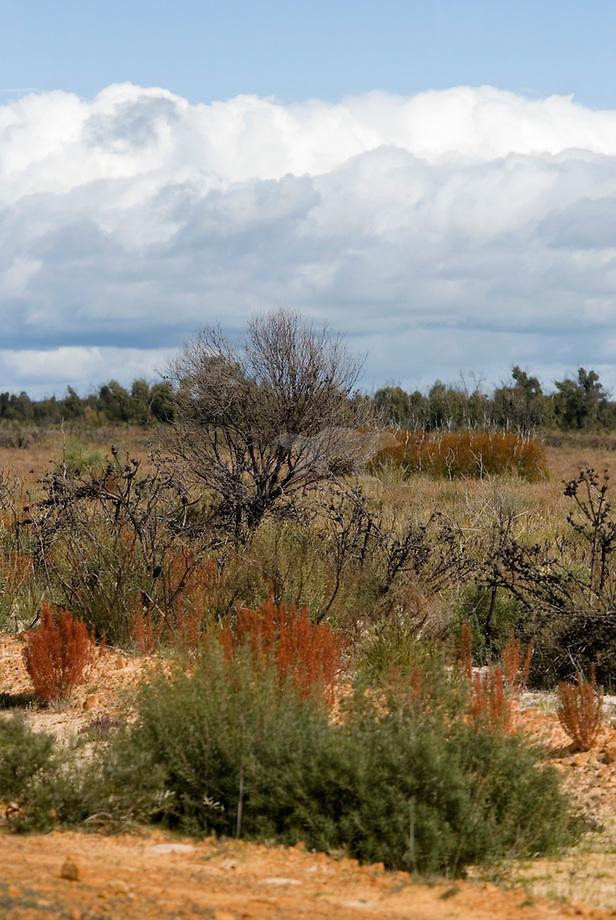 Kleurige struikbegroeing in Little desert, Australi'.
