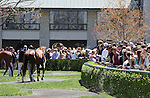 April 11, 2015: Keeneland.   Candice Chavez/ESW/CSM