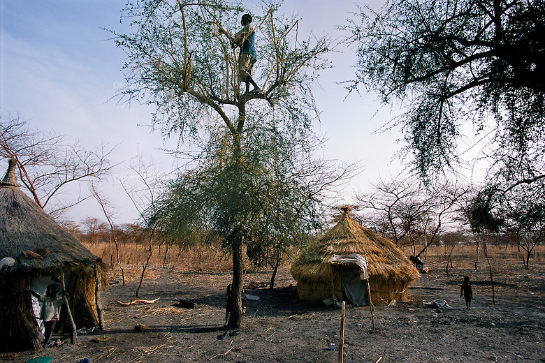 Eating Leaves.In the last rebel areas of the oil patch, people are so desperate for food they only have leaves to eat.  Villagers climb to the tops of the trees because they have already eaten most all the leaves below. ..Story Summary:.Sudan, the largest country in Africa, hosts a civil war between the Islamic North and the African South that has the highest casualty rate of any war since World War II...Two and a half million people have been killed in this insidious conflict.  It drags on because Southerners have no voice, and the Northerners have engineered ÒThe Perfect WarÓ where none of their people are killed...The North forces people out of the South by bombing them, burning their crops, and harassing them with gunships. They abduct their children and draft them to fight with the Northern armyÑforcing southerners to fight their own brothers...This story is particularly interesting now because there is a small window for peace in a civil war that has been dragging on since the end of colonial rule.  The war has always been about tribal issues and ideologyÉ but more than that, it is about resources.  This clash over resources may bring peace.  The North controls the pipeline and the only port, and the South controls the land...The story of Sudan has always been the continual transference of wealth from the resources of the south to the elite few who live in the deserts of the north.  And the sucking sound in the middle of the country is from the corrupt government in northern Khartoum..