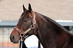 17 January 2010.   Kentucky Stallion Farms.  Bernardini being shown at Darley @ Jonabell farm.