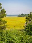 Marshlands at Hammonasset State Beach Park.