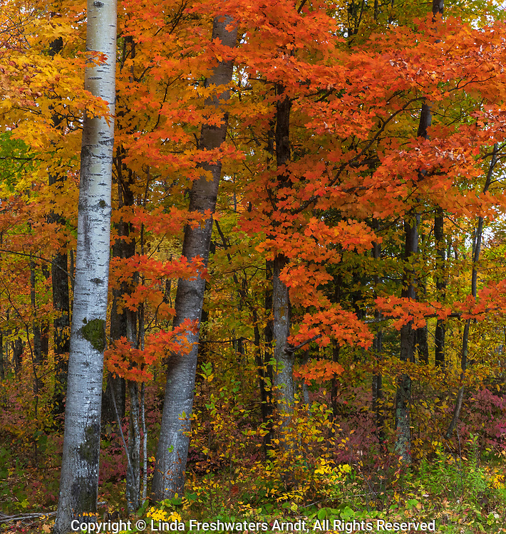 Fall colors in northern Wisconsin.