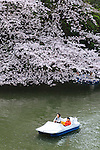 People enjoy cherry blossoms in full bloom from a rowing boat at Chidorigafuchi on April 1, 2016, Tokyo, Japan. On Thursday, the Japan Meteorological Agency announced that Tokyo's cherry trees were in full bloom, three days earlier than usual, but two days later than last year. Chidorigafuchi is one of the most popular spots during this season, where thousands of visitors come to see the cherry blossom trees that line the Imperial Palace moat. (Photo by Rodrigo Reyes Marin/AFLO)