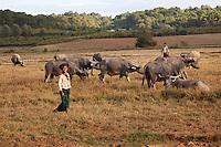 Myanmar, Burma, Shan State.  Young Boy with Water Buffalo.
