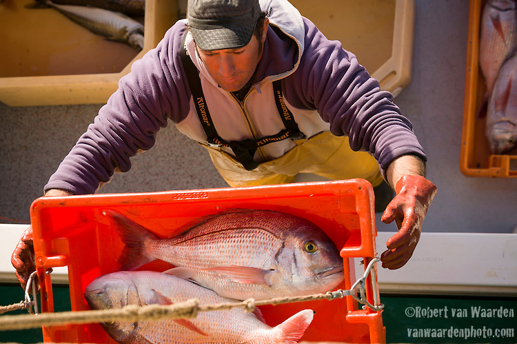 A fisherman hoists two red snapper fish from his boat at the port of Sagres in the Algarve region of Portugal.