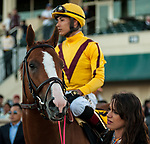 HALLANDALE BEACH, FL - March 3: Good Magic, #6, parades onto the track with jockey Jose Ortiz for trainer Chad Brown before the Xpressbet Fountain of Youth Stakes (Grade II) at Gulfstream on March 3, 2018 in Hallandale Beach, FL. (Photo by Carson Dennis/Eclipse Sportswire/Getty Images.)