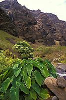 Nualoa Aina, Na Pali, Kauai