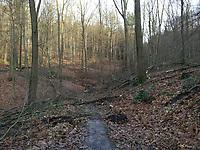 Waldrodungen_Ardey