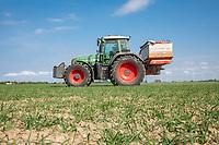 Spreading nitrogen onto wheat - Lincolnnshire, April