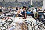 Portugal, Lissabon Region, Setubal: Fischstand in der Markthalle Mercado do Livramento | Fresh fish stall inside the Mercado do Livramento taken in the morning, Avenida Luisa Todi, Setubal; Lisbon region; Portugal, Europe