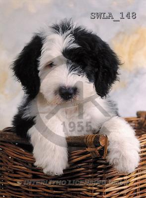 Carl, ANIMALS, photos(SWLA148,#A#) Hunde, perros