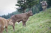 Fotoreportage von Biobauer Urs Heinrich vom Hof Plaschair in Bergün<br /> <br /> Copyright 2015 © Zvonimir Pisonic