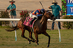 DEL MAR, CA  SEP 5: #8 Raymundos Secret, ridden by Flavien Prat, is all alone in the stretch of the John C. Mabee Staakes (Grade ll) at Del Mar Thoroughbred Club on September 5, 2020 in Del Mar, CA.(Photo by Casey Phillips/Eclipse Sportswire/CSM.
