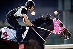 DUBAI, UAE - MARCH 23: Apollo Kentucky on the track at Meydan Race Track in preparation for the Dubai World Cup Race on March 23, 2017 in Dubai, UAE. (Photo by Douglas DeFelice/Eclipse Sportswire/Getty Images)