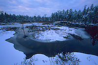 Snow-covered Savannah, flowing winter stream, Pine Barrens, New Jersey
