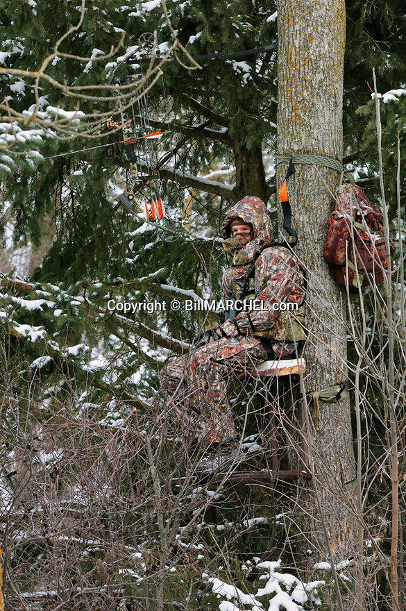 00105-050.13 Bowhunting:  Archer in tree stand is well camouflaged as he hunts on cold day after recent snow fall.  Hunt, winter, late season, spruce.