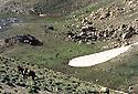 Iraq 1980.Nomads' camp at Kalashin.Irak 1980.Camp de nomades a Kalashin