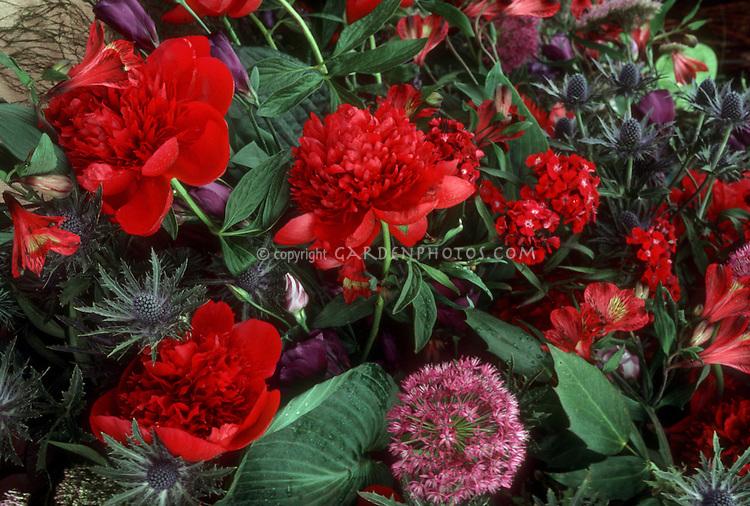 Paeonia Red Charm peonies with Allium ornamental onion, Eryngium sea holly, & Alstromeria in cut flower arrangement with hosta foliage leaves