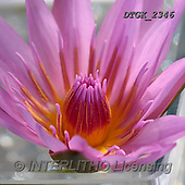 Gisela, FLOWERS, BLUMEN, FLORES, photos+++++,DTGK2346,#F#, EVERYDAY