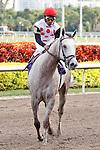 Zo Impressive with jockey Rajiv Maragh after winning at Gulfstream Park, Hallandale Beach Florida.