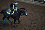 DEL MAR, CA - NOVEMBER 02: Arrogate, owned by Juddmonte Farms, Inc. and trained by Bob Baffert, exercises in preparation for Breeders' Cup Classic  at Del Mar Thoroughbred Club on November 2, 2017 in Del Mar, California. (Photo by Michael McInally/Eclipse Sportswire/Breeders Cup)