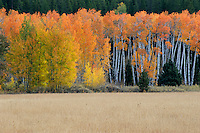 Meadow and aspens in morning light<br />   north of Coulter Village<br /> Grand Teton National Park<br /> Rocky Mountains, Wyoming