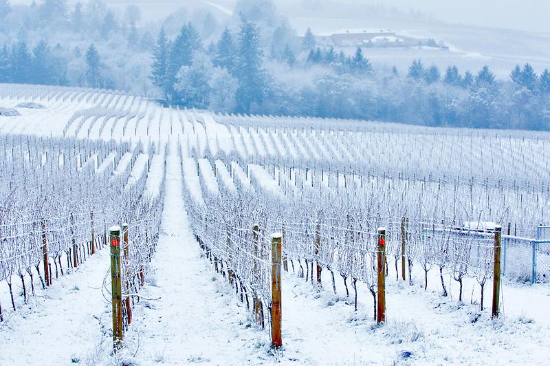 Sokol Blosser Vineyards with snow. Oregon