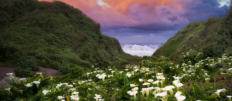 Calla lillies and sunrise clouds. Garrapata State Park, California