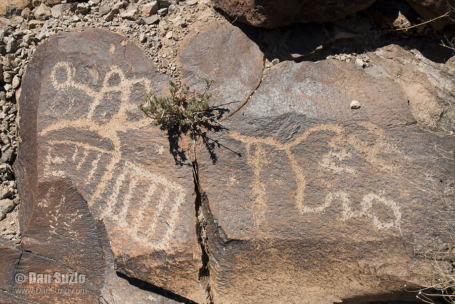 Petroglyphs, Petroglyph Canyon, Sloan Canyon National Conservation Area, Nevada. This area contains one of the greatest concentrations of Native American rock art in the United States, with more than 1,700 petroglyphs made over a period of about 2,000 years.