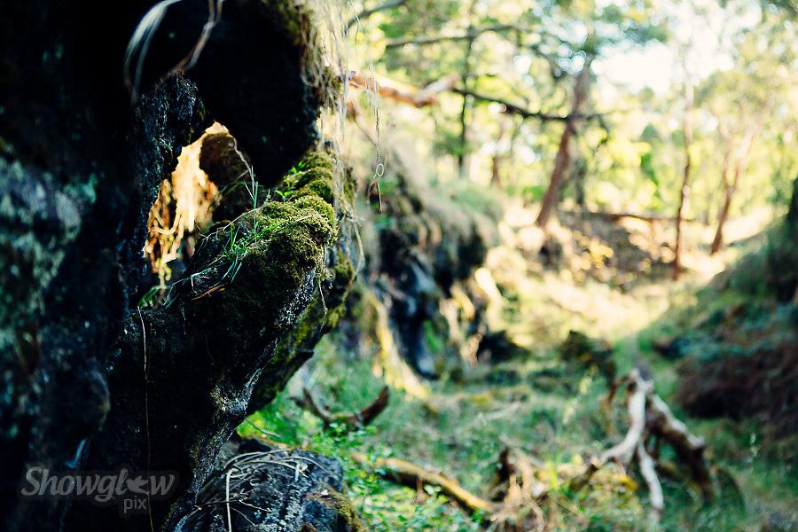 Image Ref: CA473<br /> Location: Mt Eccles National Park<br /> Date of Shot: 23rd November 2017
