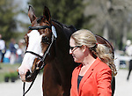 April 23, 2014: Wundermaske and Sharon White during the first horse inspection at the Rolex Three Day Event in Lexington, KY at the Kentucky Horse Park.  Candice Chavez/ESW/CSM