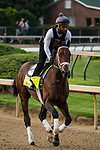LOUISVILLE, KY - MAY 02: Magnum Moon gallops in preparation for the Kentucky Derby at Churchill Downs on May 2, 2018 in Louisville, Kentucky. (Photo by Alex Evers/Eclipse Sportswire/Getty Images)