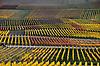 Weinberge mit gelbem, grünem und rotem Weinlaub im Herbst