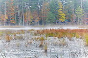 Quincy Bog Natural Area in Rumney, New Hampshire USA during the autumn months. This natural area is a 50 acre preserve owned by the Rumney Ecological Systems (non-profit organization).