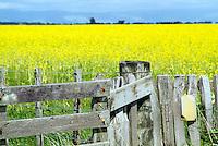 Wellington<br /> Photo by Masanori Udagawa<br /> www.photowellington.com