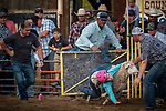 Opening day of the 82nd annual Amador County Fair, Plymouth, California, with Mutton Bustin' and the Miss Amador Scholarship Pageant.<br /> .<br /> .<br /> .<br /> @AmadorCountyFair, #1SmallCountyFair, #VisitAmador, #PlymouthCalifornia, #AmadorCountyFair, #Best4DaysOfSummer, #AmadorCounty, #26thDAA