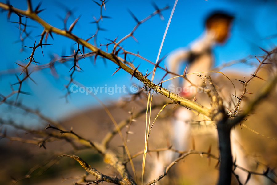 """A Cora Indian boy, with body painted all over, runs through a spiny bush before the sacred ritual ceremony of Semana Santa (Holy Week) in Jesús María, Nayarit, Mexico, 21 April 2011. The annual week-long Easter festivity (called """"La Judea""""), performed in the rugged mountain country of Sierra del Nayar, merges indigenous tradition (agricultural cycle and the regeneration of life worshipping) and animistic beliefs with the Christian dogma. Each year in the spring, the Cora villages are taken over by hundreds of wildly running men. Painted all over their semi-naked bodies, fighting ritual battles with wooden swords and dancing crazily, they perform demons (the evil) that metaphorically chase Jesus Christ, kill him, but finally fail due to his resurrection. La Judea, the Holy Week sacred spectacle, represents the most truthful expression of the Coras' culture, religiosity and identity."""