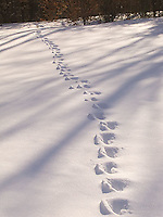 Animal tracks through the snow<br />