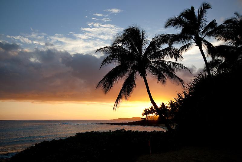 Poipu sunset with palm trees. Kauai, Hawaii.