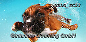 REALISTIC ANIMALS, REALISTISCHE TIERE, ANIMALES REALISTICOS, dogs, paintings+++++SethC_Prince_IMG_1441BOOKflaat,USLGSC53,#A#, EVERYDAY ,underwater dogs,photos,fotos ,Seth