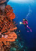 27 January 2016:  SCUBA Diver Sally Herschorn explores the reef at Captain Don's Habitat in Bonaire. Bonaire is known for its pioneering role in the preservation of the marine environment. A part of the Netherland Caribbean Islands, Bonaire is located off the coast of Venezuela and offers excellent scuba diving, snorkeling and windsurfing.  Mandatory Credit: Ed Wolfstein Photo *** RAW (NEF) Image File Available ***
